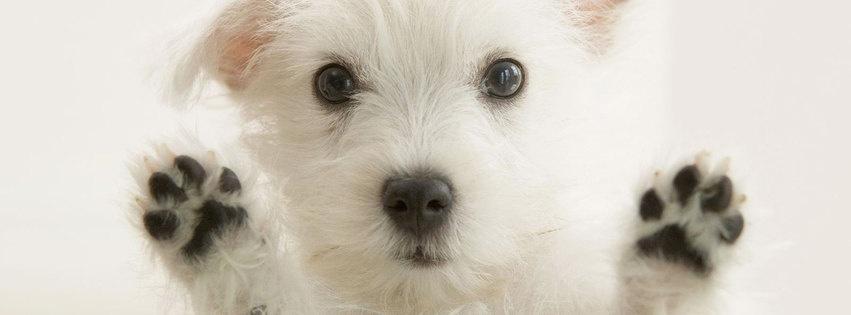 chien chiot couverture facebook