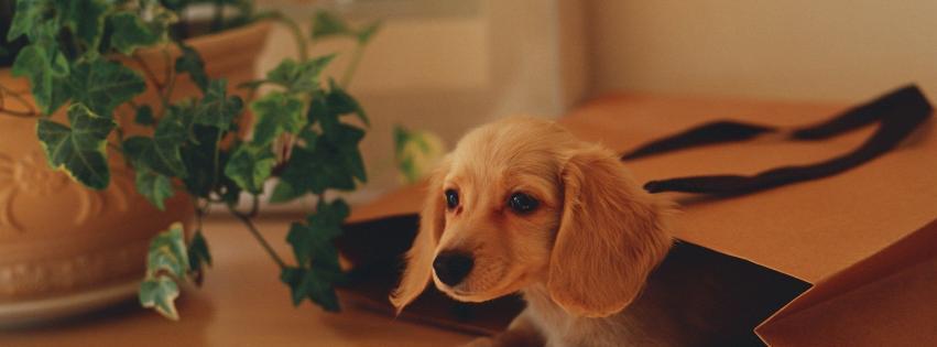 couverture facebook chiot petit chien