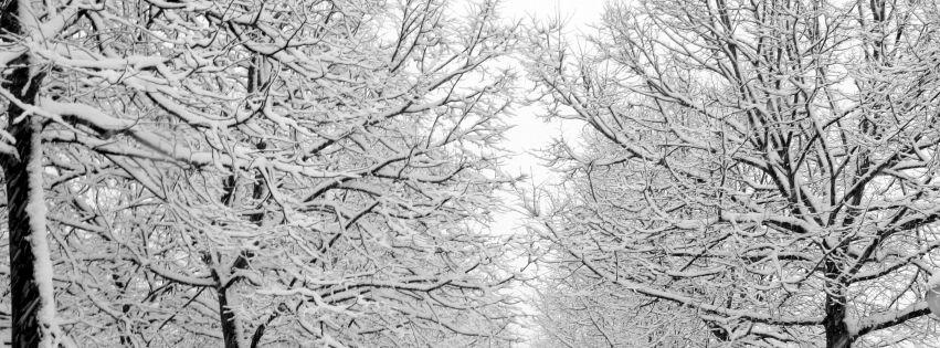 neige sur des arbres hiver