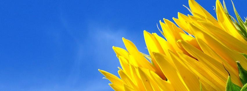 fleur jaune sur ciel bleu