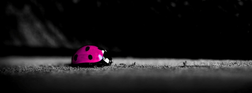 coccinelle couverture facebook