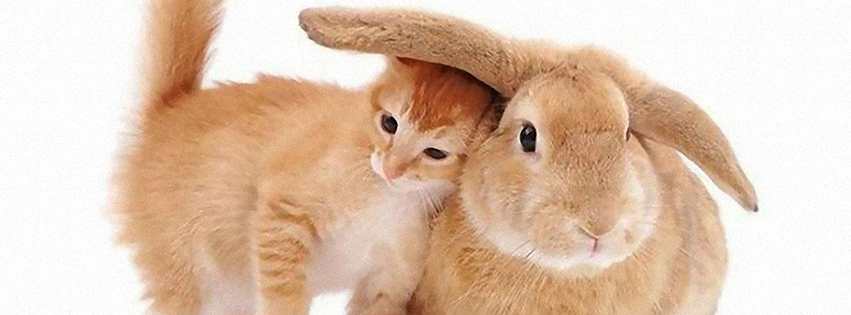 photo de couverture facebook chat et lapin