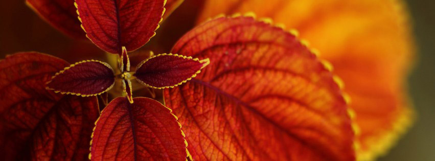 Photo de couverture facebook Automne feuilles rouges